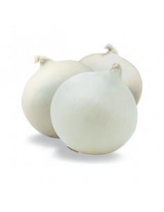 Čebula bela